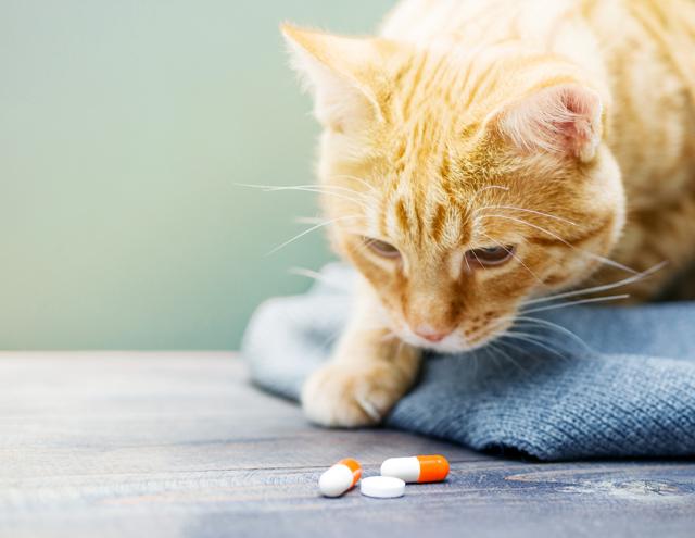 Акридерм для кошек - инструкция по применению