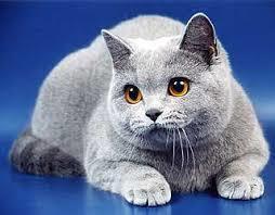 Кошка какает слизью - причины и лечение