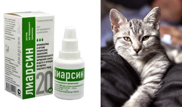 Лиарсин для кошек - инструкция к применению, дозировка