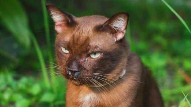 Риноскопия носа у кошек - видыи и показания к проведению