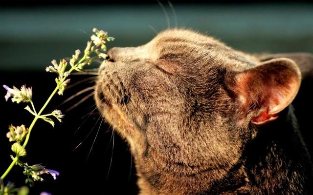 7 причин почему у кошки заложен нос - чем лечить