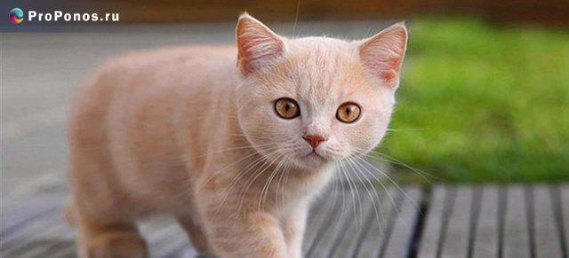 У котенка понос с кровью - что делать?