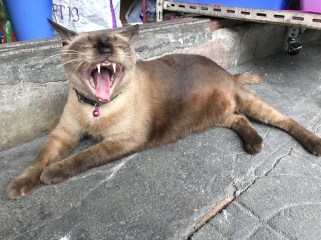 Болезни зубов у кошек - причины, симптомы, профилактика