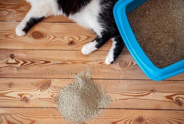 8 причин почему кошка ходит мимо лотка - что делать
