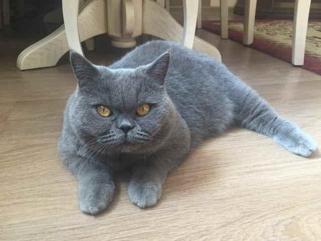У кошки после родов кровяные выделения