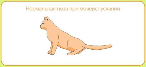 8 причин мочекаменной болезни у котов - лечение