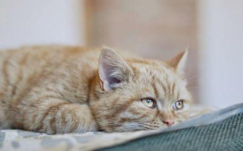 Кетофен для кошек: инструкция по применению