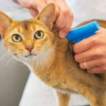 cупрастин кошке - инструкция по применению, дозировка