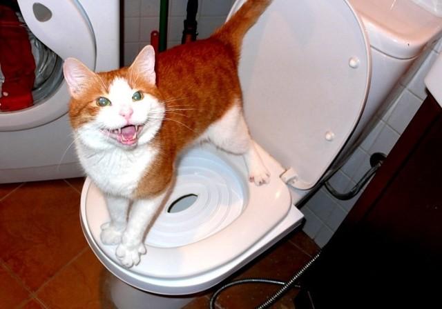 5 причин почему кот не может сходить в туалет - симптомы и лечение