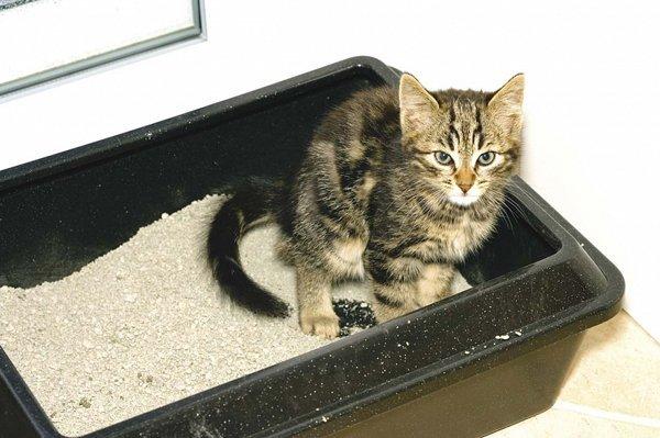 Спрей для приучения котенка к лотку - плюсы и минусы