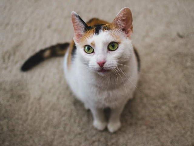 15 симптомов сотрясения мозга у кошек - что делать