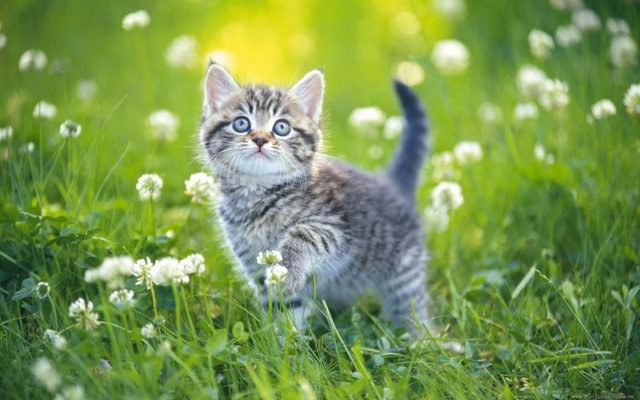 Свинина кошкам - можно ли давать, почему нельзя