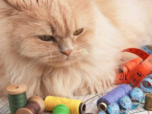Кот проглотил иголку что делать, последствия