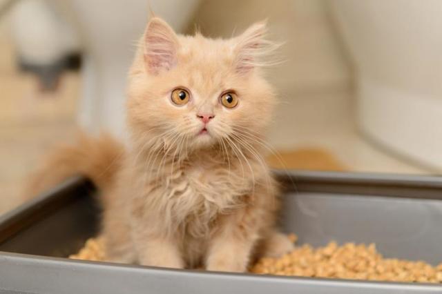 Наполнитель для кошек - виды и как правильно выбрать