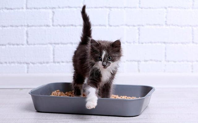 6 причин почему кот не писал сутки - что делать и симптомы