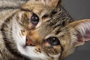 9 причин заворота век у кошки - симптомы, лечение, профилактика