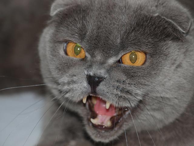 Как успокоить загулявшую кошку - практические советы