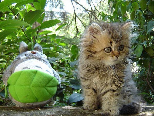 Почему кот сосет свой хвост - что делать?