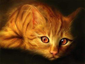 Глицин для кошек: инструкция по применению