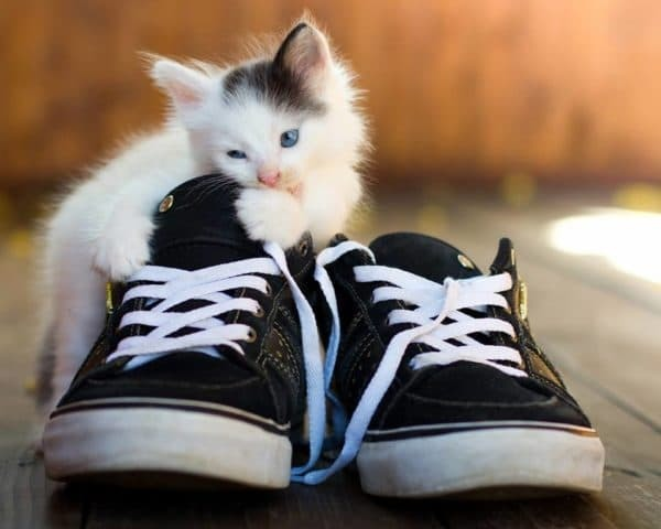 Почему кошки любят обувь: причины и что делать