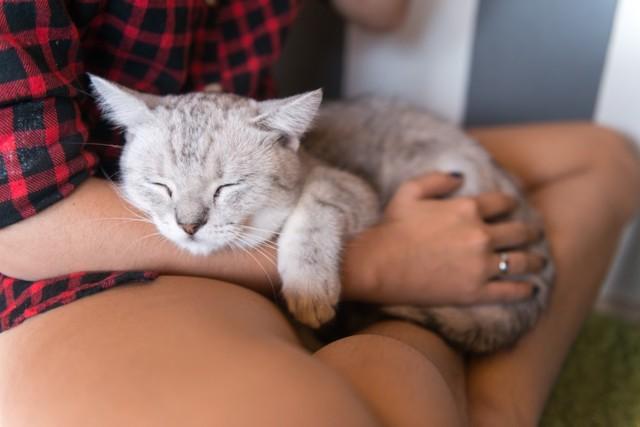 Кот дергается во сне - причины и что делать