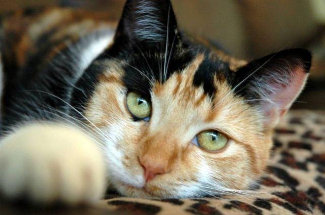 Максидин для кошек - инструкция по применению препарата