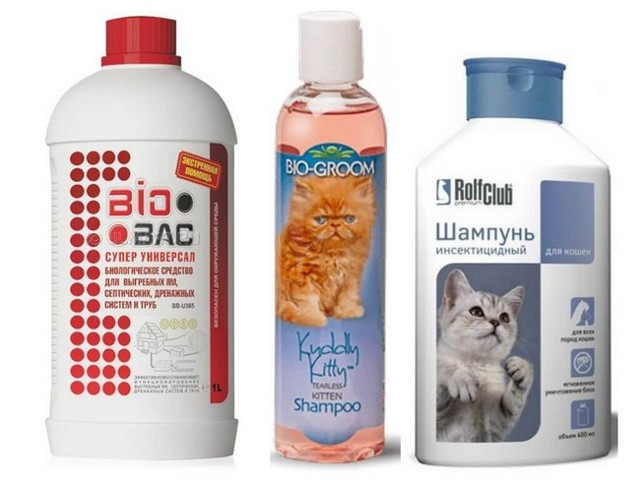 Как вывести блох у кошки - капли, ошейники, шампуни