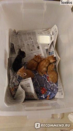 Корм для кошек при запорах - список и описание