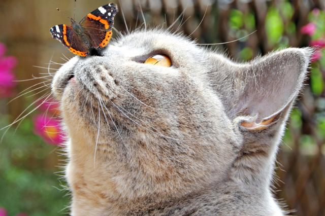 Сухой нос у кота - что ето значит?