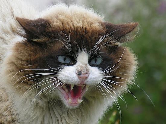 Как кошки влияют на человека - 5 интересных фактов