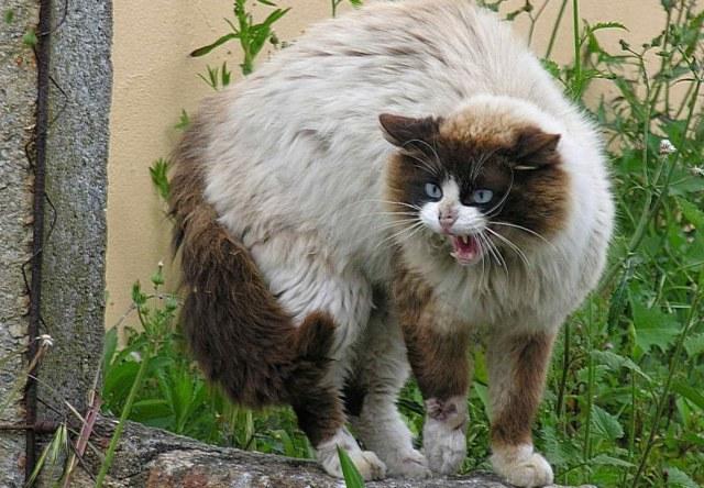 Как успокоить котенка - список методов и причины агрессии