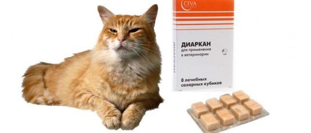 Диаркан для кошек - инструкция по применению, состав, дозировка