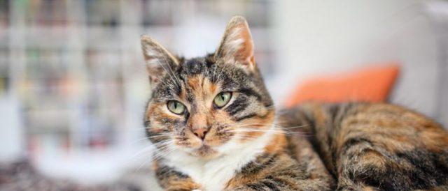6 причин почему у кота урчит в животе - что делать