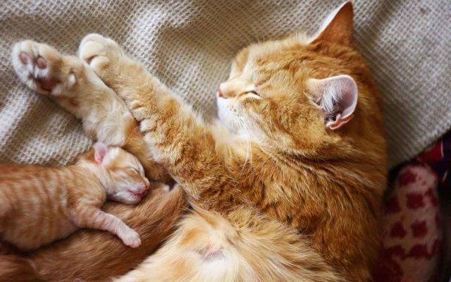 Уход за новорожденными котятами - как правильно ухаживать