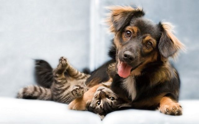 ТОП отличия кошек от собак в поведении и физиологии