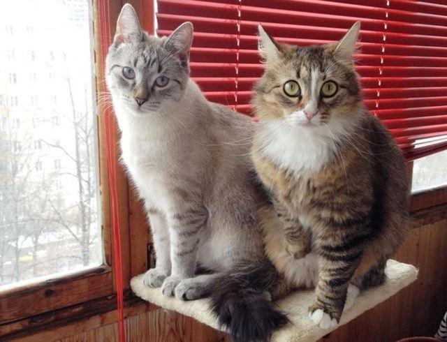Как подружить взрослую кошку с котенком - основные привила