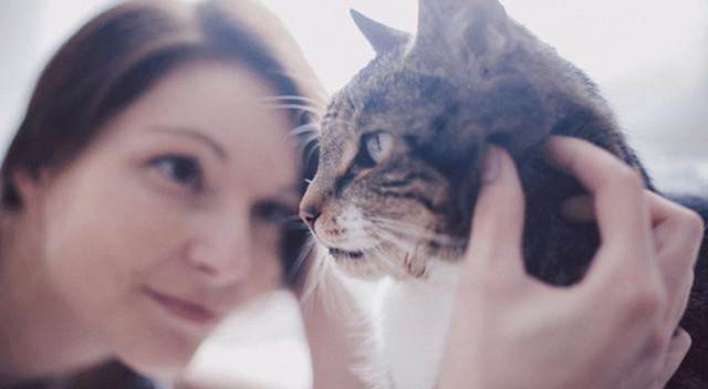 Почему кошка показывает задницу: как понять кошку