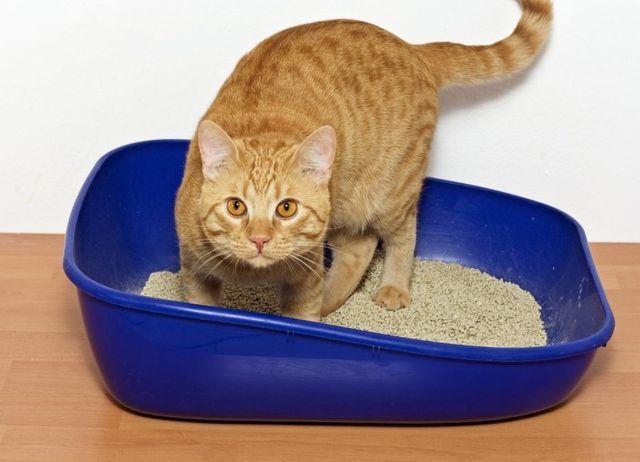 7 причин почему кошка мало писает - что делать?