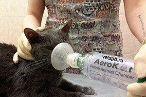 6 причин астмы у кошек - лечение, профилактика, диагностика