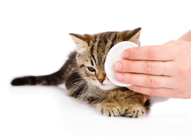 У кота сопли и слезятся глаза - что делать и чем лечить