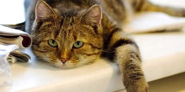 Котенок ничего не ест и его рвет - что делать
