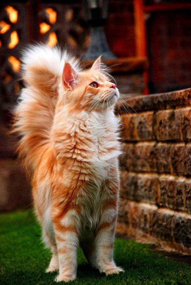 6 симптомов поликистоза почек у кошек: что делать