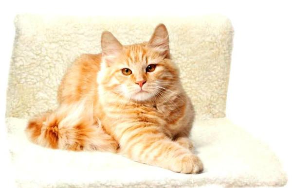 Фунгин для кошек: инструкция по применению