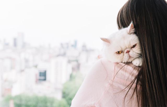 У кошки шишка на животе под кожей - что это