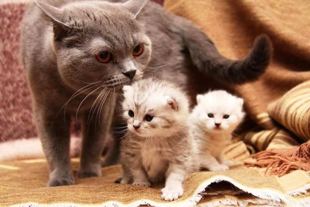 Как помочь кошке при родах в домашних условиях