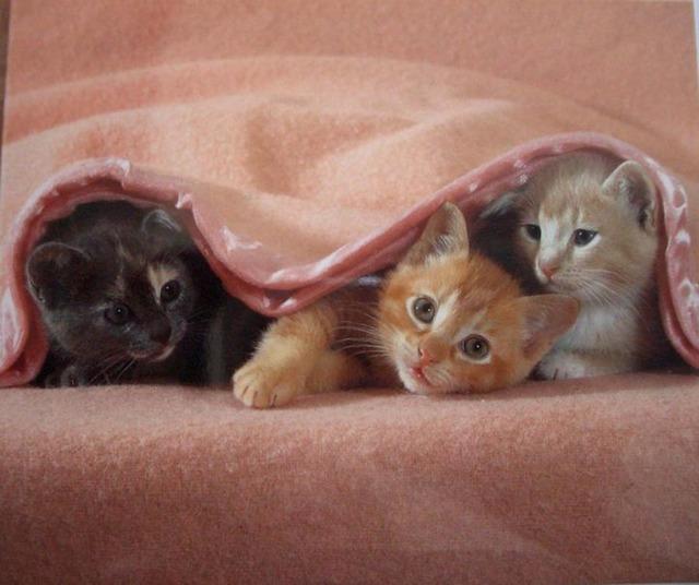 ТОП 7 причин, почему кошка прячется под одеяло
