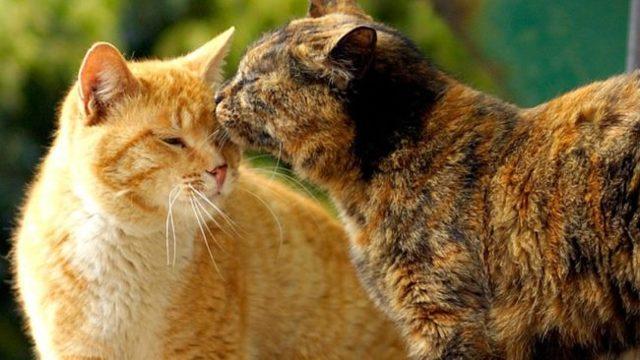 В каком возрасте кошки начинают гулять - в сколько месяцев