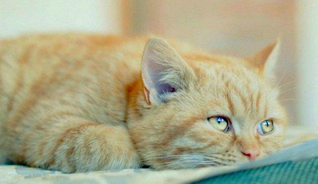 Фурагин для кошек: инструкция по применению