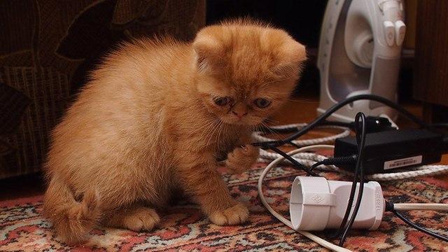 ТОП 4 причины, почему кот грызет провода