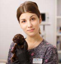 УЗИ для кошек: подготовка, как проводят процедуру
